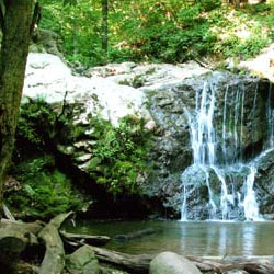 Patapsco Valley State Park - Hollofield