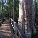 Audubon Center at Beidler Forest