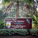 Bears Bluff National Fish Hatchery