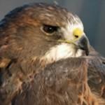 Audubon Center at Chatfield State Park