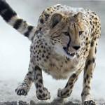 Animal Ark Wildlife Sanctuary