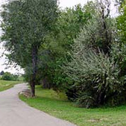 Cottonwood Park and Wichita Wild Habitat Area