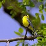 Audubon Center at Bent of the River