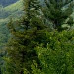 Backbone State Forest