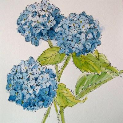 Botanical Sketching DgCoQll7hL-Yhkc9uqZgVz0b