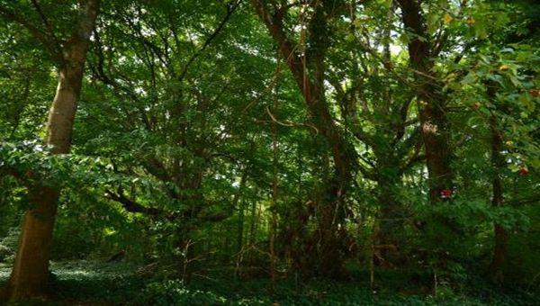 Morgan Run Natural Environment Area
