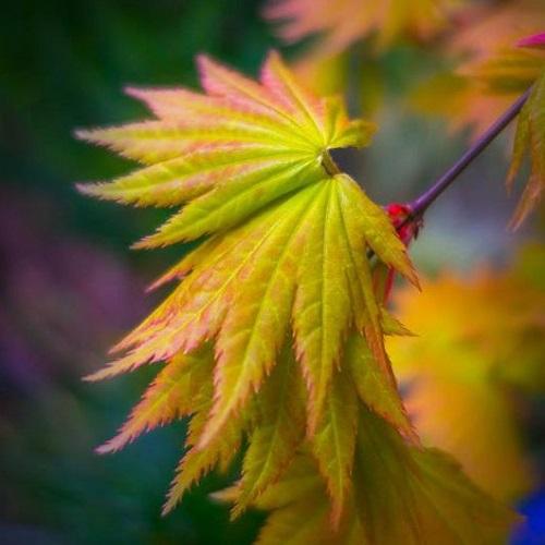 Patapsco Valley State Park-Avalon/Glen Artney/Orange Grove Areas
