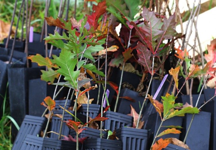 10-15 Conservancy_Tree-Planting-Dtown_Stack-of-Trees_110915_R