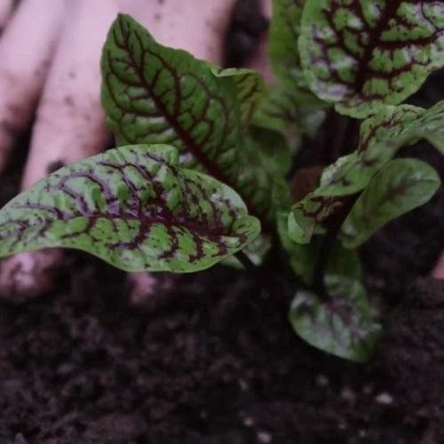 Biosolids GrowCo500px