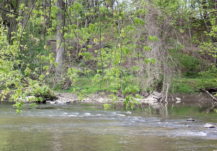 Brandywine River Cleanup